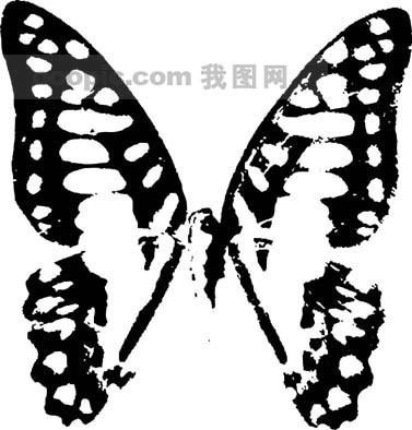 笔刷 昆虫 蝴蝶