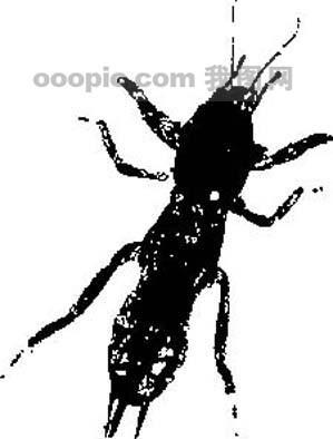 首页 设计图 其他 图片素材 > 全球首席大百科 水墨 黑白 笔刷 昆虫