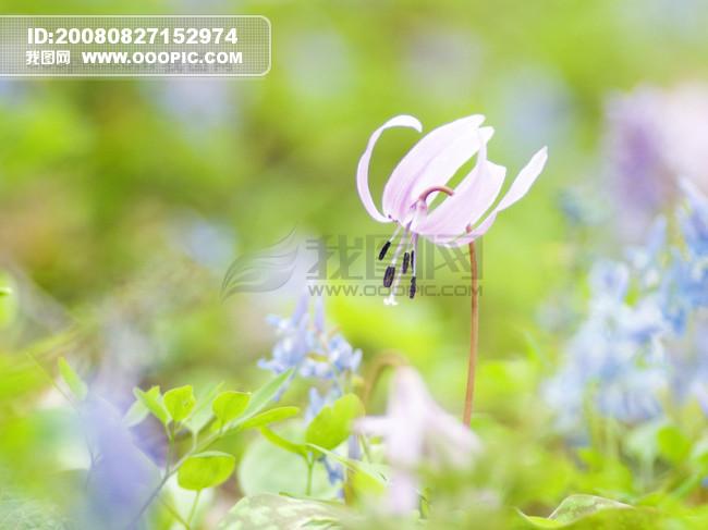 风景花朵模板下载 风景花朵图片下载