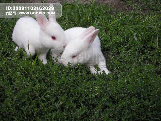 我家的小白兔-爱笑的男孩-猫猫的博客-校讯通博客